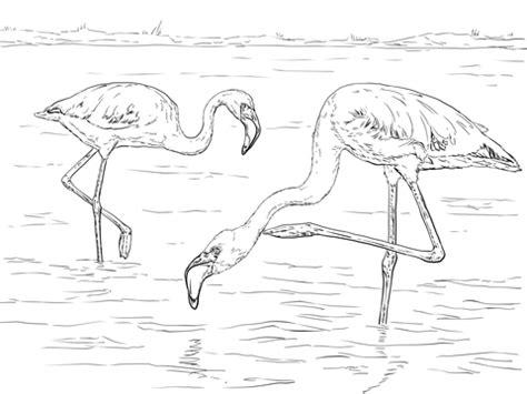 lesser flamingo coloring page supercoloringcom