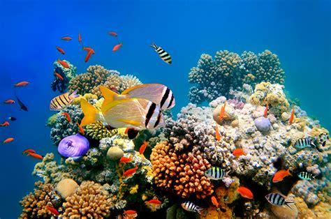 wissenschaftsjahr meere und ozeane entdecken schuetzen
