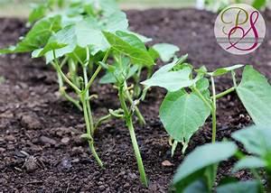 Raised Garden Update - Positively Splendid {Crafts, Sewing ...