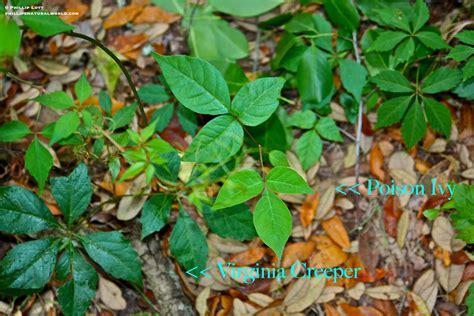 Phillips Natural World Floridas 4 Common Poisonous Plants