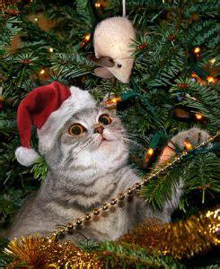cat proofing  christmas tree petfirst pet insurance