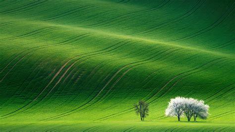 wallpaper grassland landscape green huawei mediapad