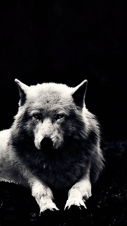 Wolf Wallpapers Phone Mobile Wolves Holly Cell