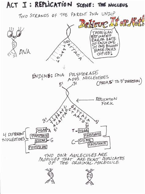 transcription  translation practice worksheet answer