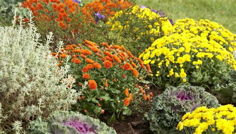 best fall blooming annuals and perennials