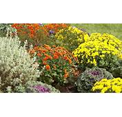 Plan For Your Fall Garden In Spring  Royal Examiner