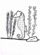 Seaweed Coloring Pages Seahorse Drawing Kelp Around Its Printable Nature Getdrawings Getcolorings sketch template