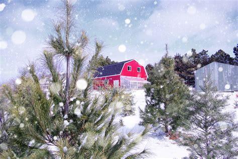 christmas tree farm near me appleron wi 11 places to get fresh live trees in nebraska