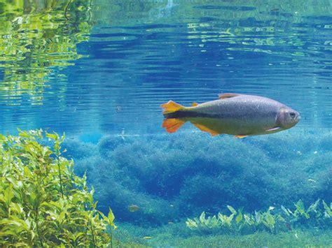 visite de l aquarium d aquatis onvasortir lausanne