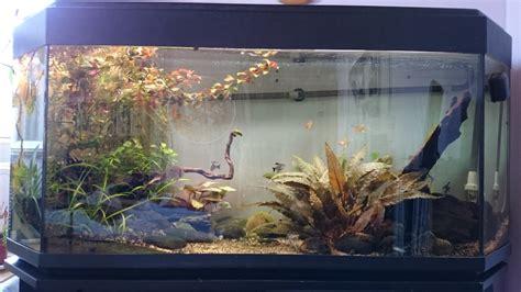 re eclairage aquarium eclairage d un aquarium par led quelle puissance