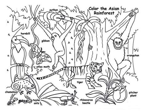 Rainforest Animals Coloring Pages by Rainforest Animals Coloring Page Print