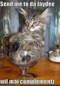 hilarious cats picz cats 4