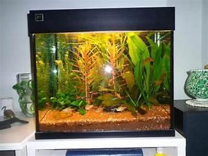 Fische Aquarium Hamburg : juwel aquarium lido in hamburg fische aquaristik kaufen ~ Lizthompson.info Haus und Dekorationen