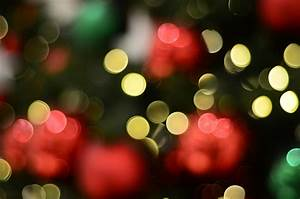 Free Images : light, bokeh, blur, abstract, plant, night ...