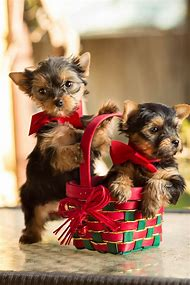 best puppies and kittens ideas and images on bing find what you
