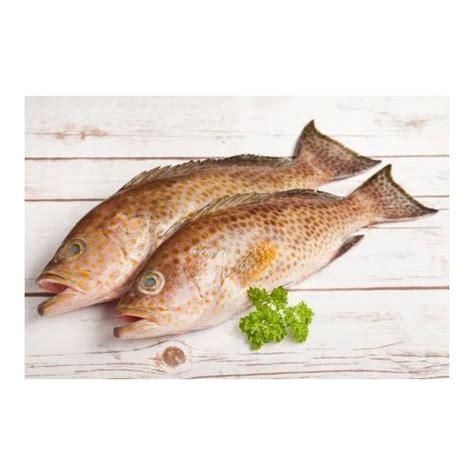 grouper fish brown kilogram bone per
