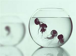 animal, black and white, composition, cool, fish bowl ...