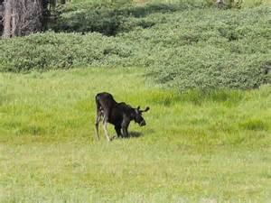 Rabbit Ears Pass Colorado