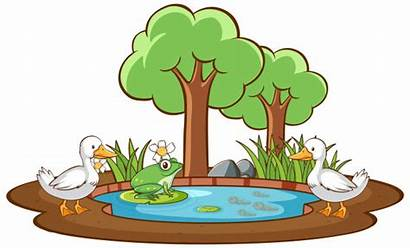 Pond Duck Frog Isolated Vector