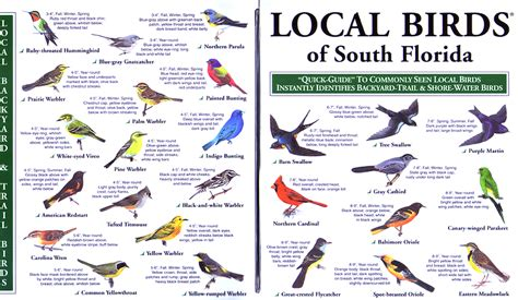 florida water bird identification chart pictures to pin on