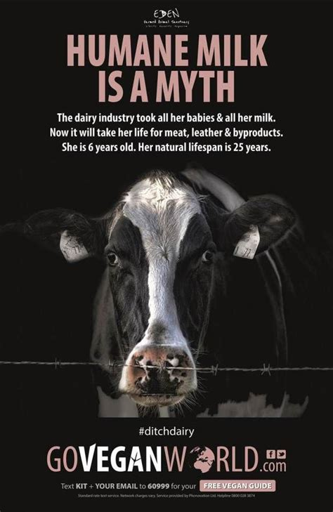 vegan campaign  feature