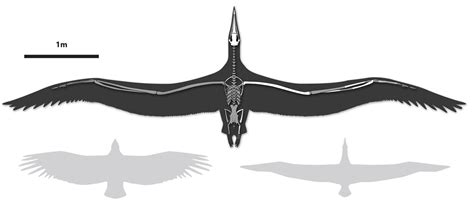 Biggest Flying Seabird Had 21-foot Wingspan, Scientists Say