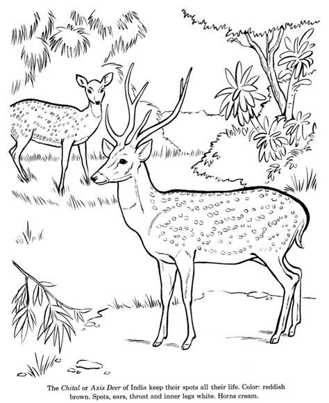 Coloring Wildlife by Free Printable Deer Coloring Pages For