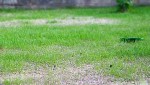 Wann Wächst Rasen : rasenpflege tipps zum s en m hen und d ngen bei westfalia versand deutschland ~ Markanthonyermac.com Haus und Dekorationen