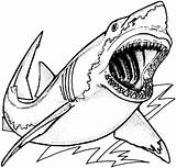 Shark Coloring Pages Jaws Animals Print Drawing Sea Animal sketch template