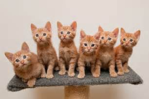 cat family a cat family cats wallpaper