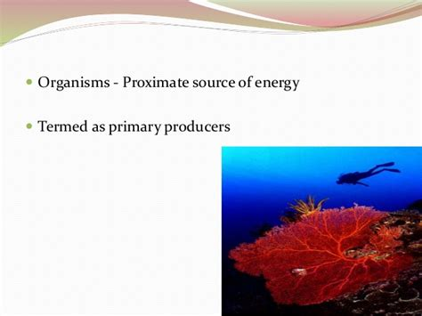 coral reefs productivity producers zooxanthellae corals