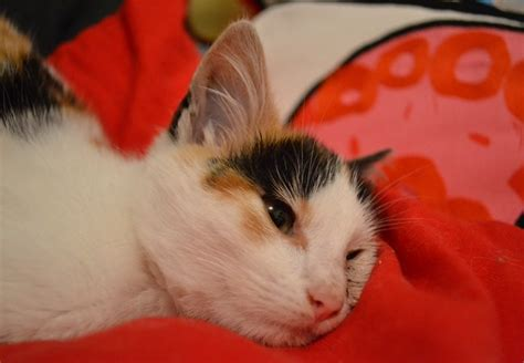 pipi canap pipi canape 28 images mon chaton de 8 mois fait