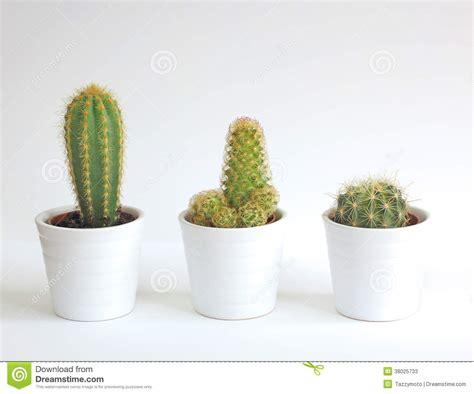 Bienfaits Du Cactus Dans Une Maison by Plantes D Int 233 Rieur De Cactus Image Stock Image Du Trois