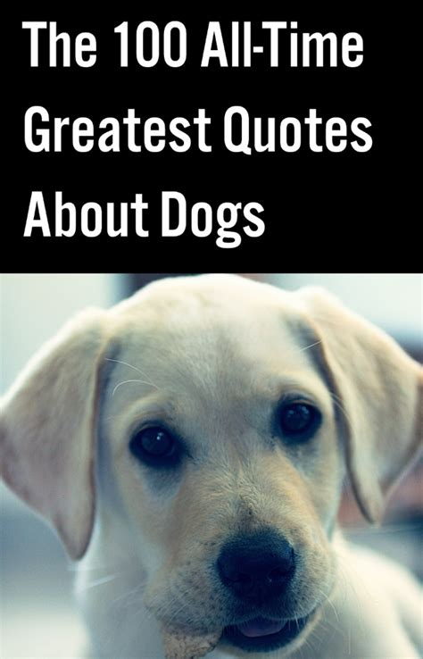 time greatest quotes  dogs  love