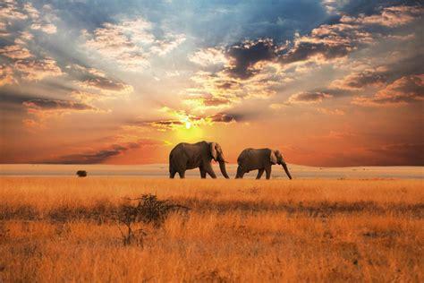 chambre romantique avec tableau brillant éléphants en afrique dans la savane