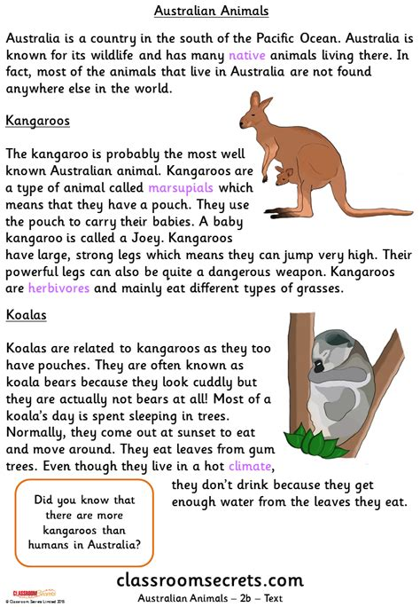 australian animals gold guided reading pack classroom