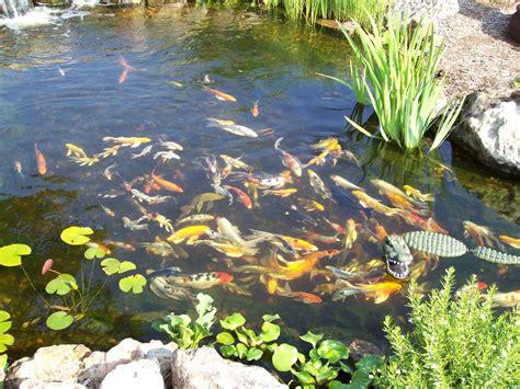 bassin d eau exterieur les soins du bassin ext 233 rieur en avril animogen