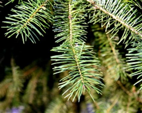 how can i reuse or recycle christmas tree needles how