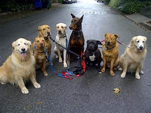 how to introduce your new dog to the pack