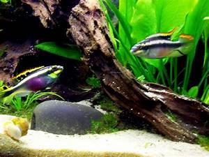 Aquarium Gestaltung Bilder : anf ngerin plant 180l aquarium aquarium forum ~ Lizthompson.info Haus und Dekorationen