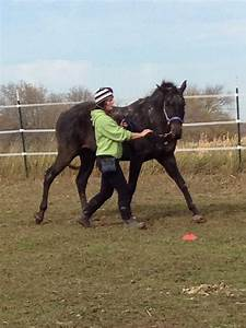 88 best Horse- Lunging/ ground work images on Pinterest ...