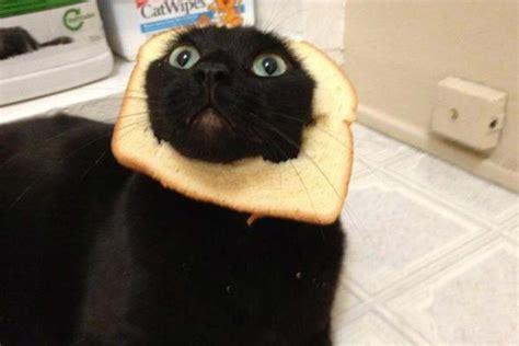 Bread Cat Breadcats