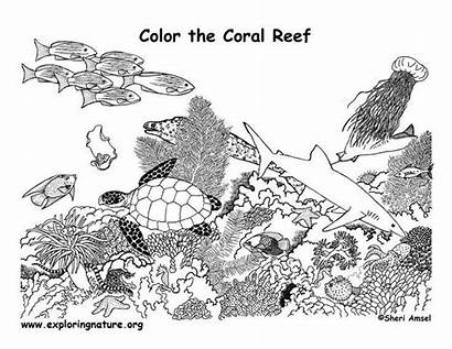 Coloring Pages Reef Coral Ocean Colouring Web