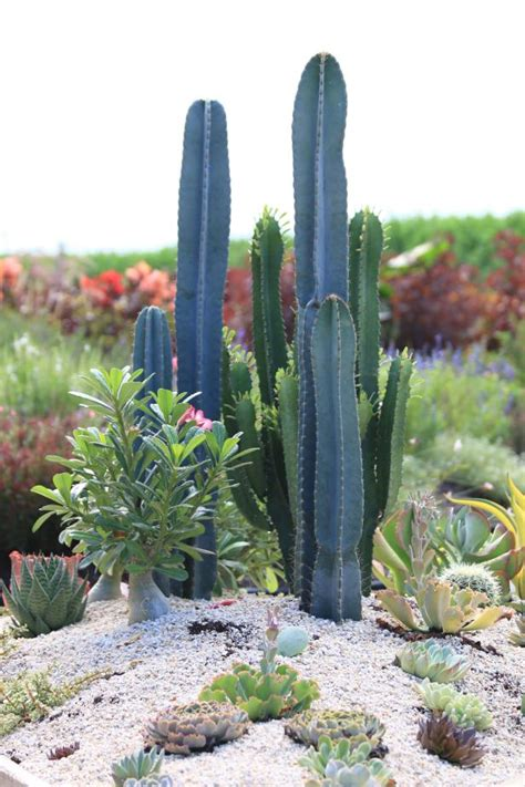 cacti  succulents  borders  accents hgtv