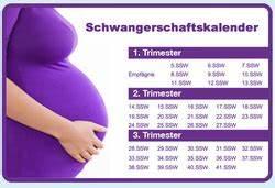 Ssw Berechnen Nach Eisprung : all categories schwangerschaft und baby ~ Themetempest.com Abrechnung