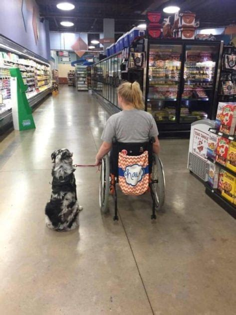 Teen Tells Stranger Not To Pet Her Service Dog And Has