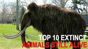Top 10 Officially Extinct Animals That May Still Be Alive ...