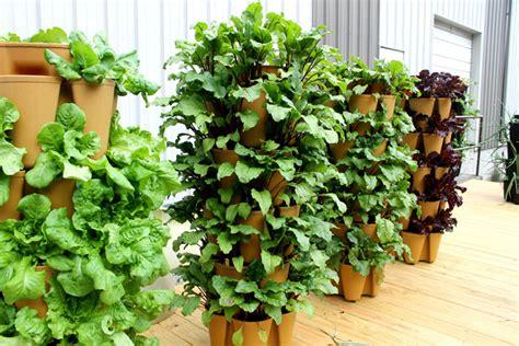Vertical Garden Lettuce by Lettuce Tower 2 Greenstalk Vertical Garden