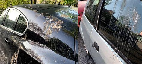 Kā mākslīgie putnu izkārnījumi palīdz aizsargāt automašīnu krāsošanu no reālām briesmām? - Kur ...