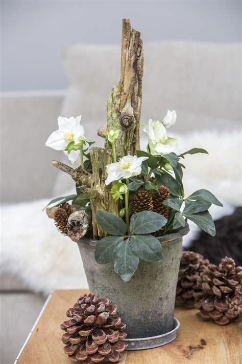 floradania marketing natural christmas rose